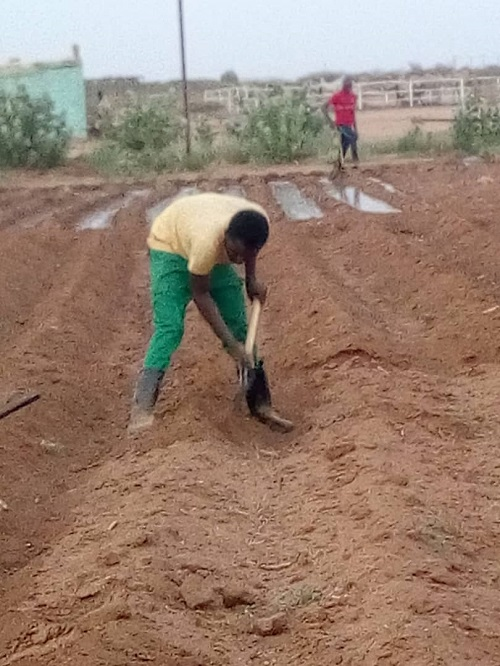 students-of-the-faculty-of-agricultural-production-and-technological-processing-take-over-the-agricultural-operations-in-the-university-farm-at-aelopon